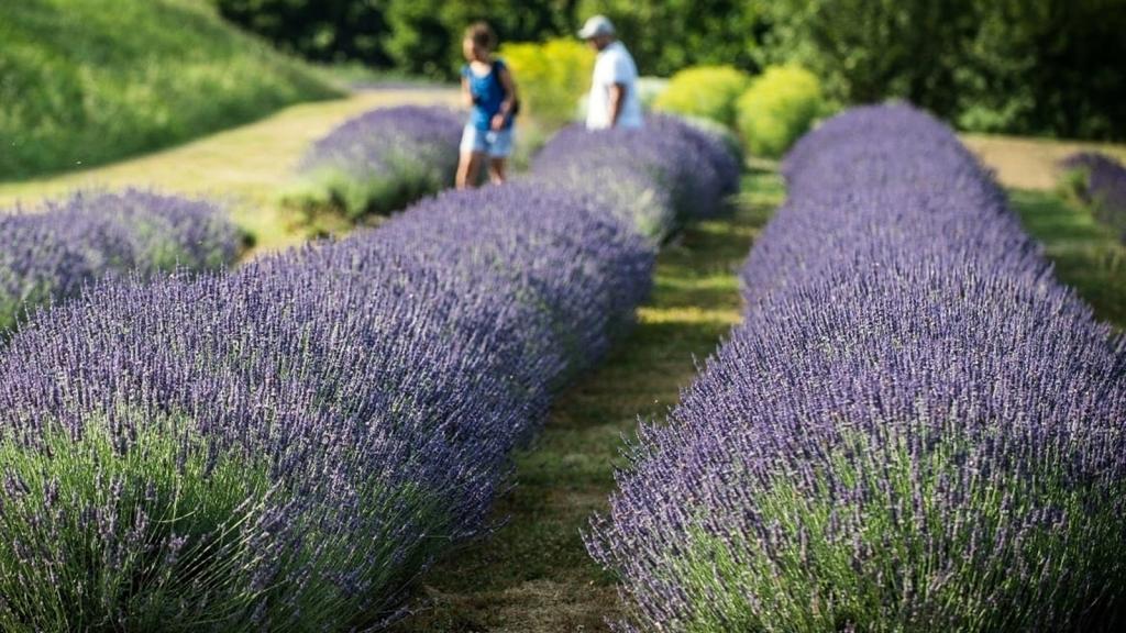 Giardino delle erbe Casola Valsenio