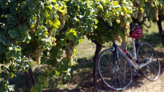 Percorsi in bici in Emilia Romagna